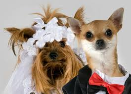 married dogs